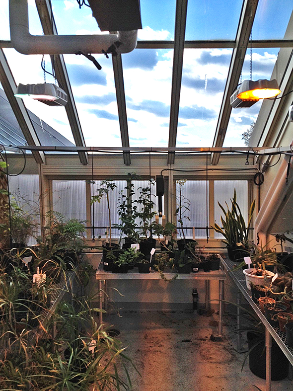 Straight eave double pitch greenhouse with hip corner and interior vertical wall.