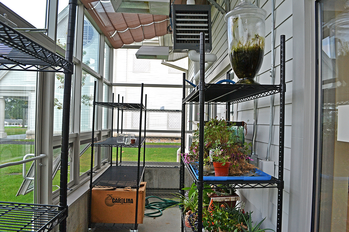 Straight eave lean-to greenhouse with two gable ends.