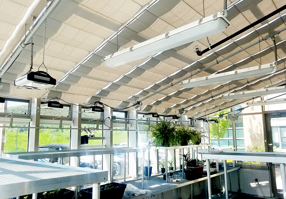 Straight eave lean-to greenhouse