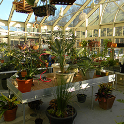 Greenhouses are good for communities