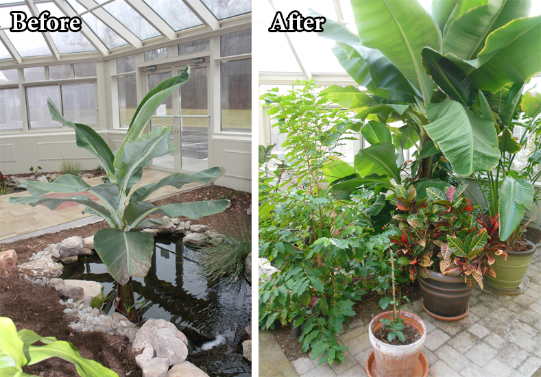 Before and After Tropical Greenhouse