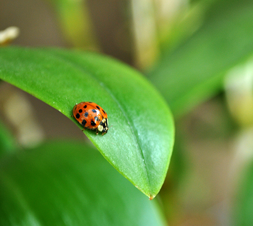 Lady Bugs Greenhouse