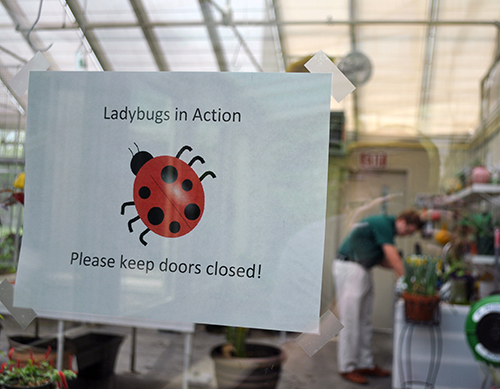 Lady Bugs in Action
