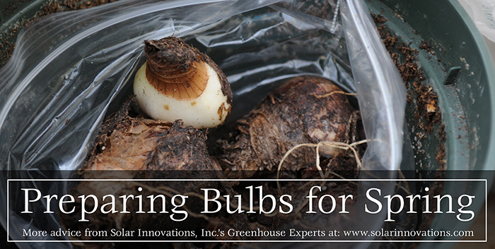 Bulbs for Spring