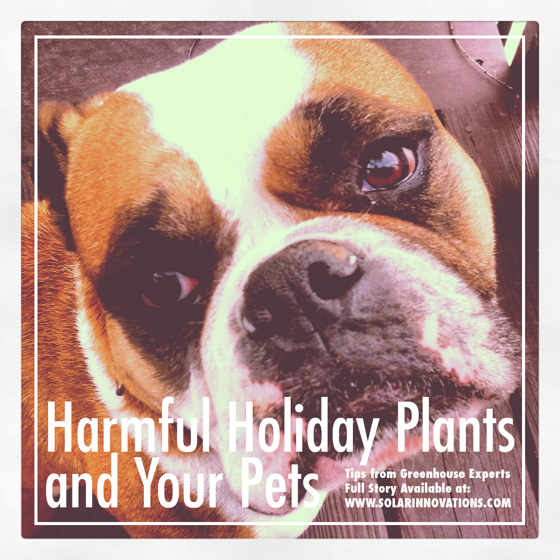 Harmful Holiday Pets Plants