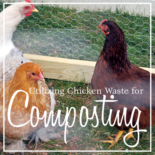 Chicken Waste Composting