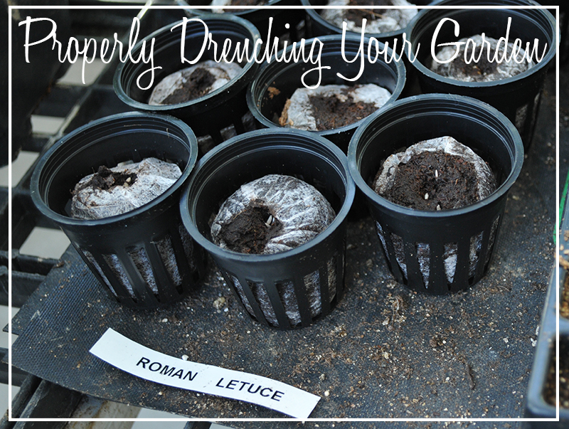 Drenching Your Garden