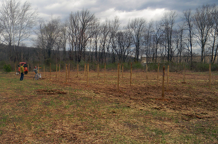 Planting a stable ecosystem for your vineyard