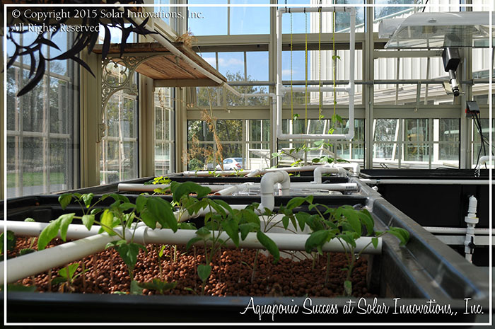 The plant progress in the Solar Innovations, Inc. sustainable aquaponic system