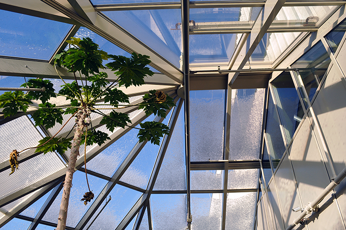 Snow-and-Ice-on-Glass-Structures-and-Greenhouses