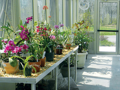 Accessory Packages Orchids