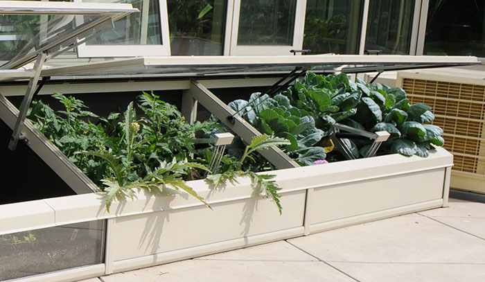 Cold growing frames