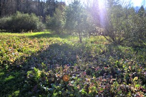 Conservation Food Plot