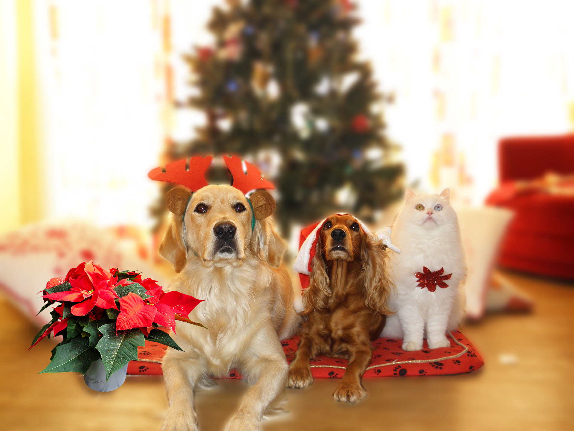 Holiday Plants Toxic to Pets