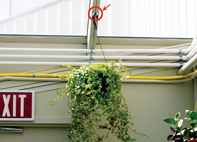 Plant hangers Single rafter