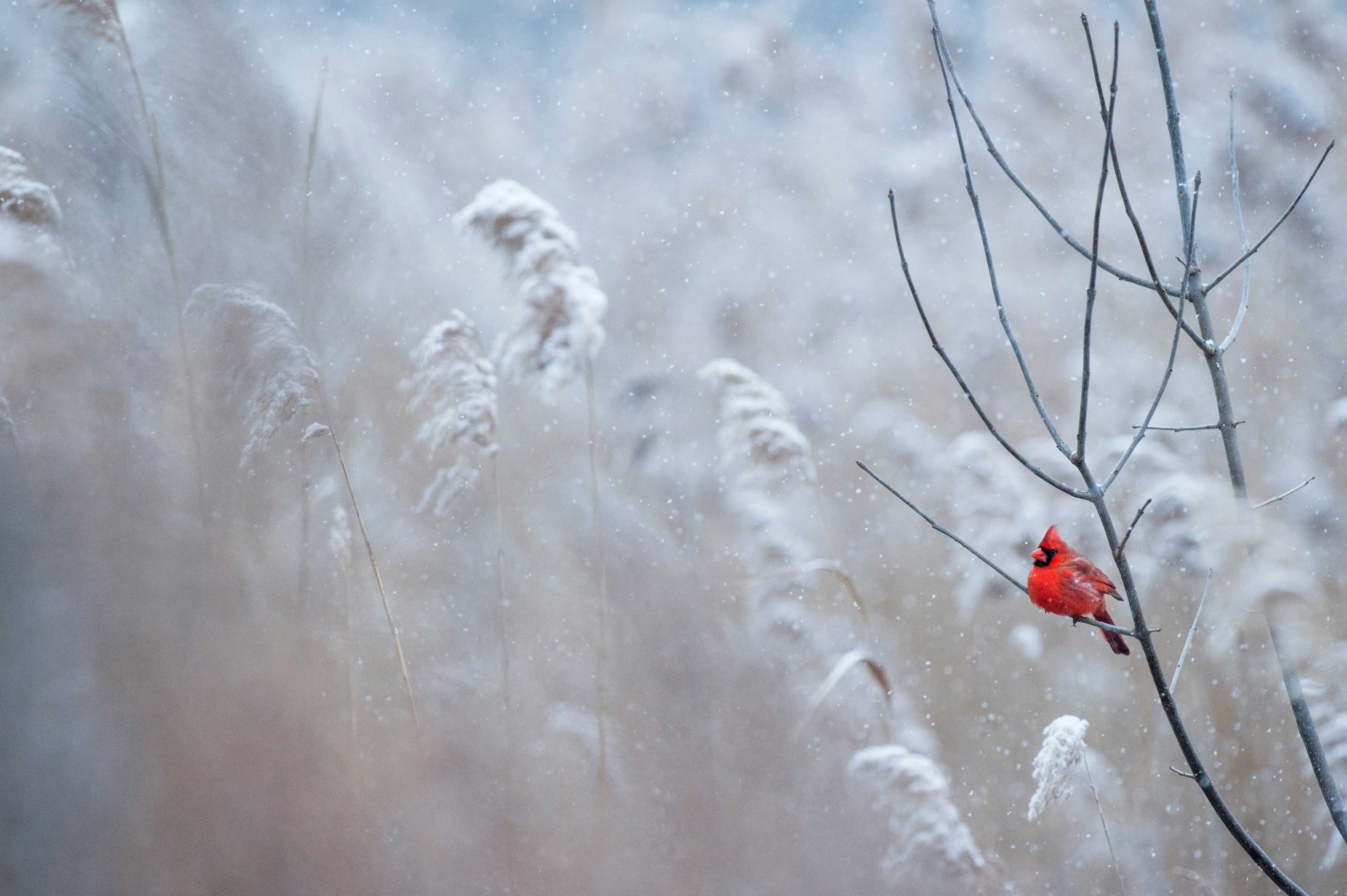 bird, tree, winter, wildlife