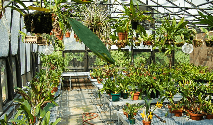 Orchid Greenhouses Solar Innovations