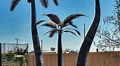 small-menu-palm-trees-1